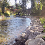Stabilizing and Naturalizing a bank along the Black River